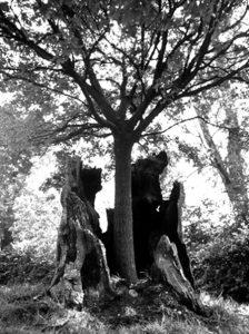arbre jeune pousse dans arbre vieux